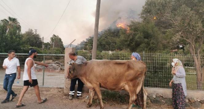 Alevlere teslim olan Marmariste göz yaşartan görüntüler