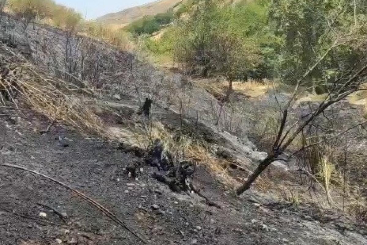 Ağaçlık alanda çıkan yangında hayvanlar telef oldu