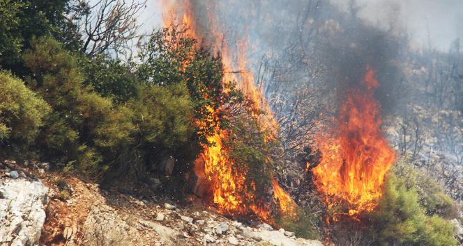 Mumcular-Mazı yolu tekrar yanıyor