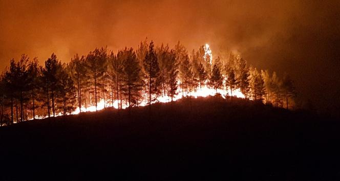 Manavgattaki yangınla ilgili bir kişi tutuklandı