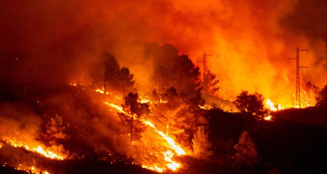 Dünyanın ormanları yanıyor