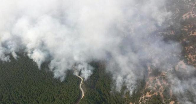 Muğlada yangınla mücadele hız kesmeden sürüyor