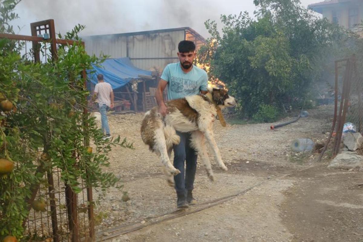 'Afet bölgelerinde ilk yardımı mutlaka görevli veteriner uygulamalı'