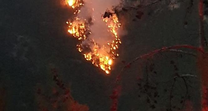 Adana Saimbeylide düşen yıldırım 3 kişiyi yaralandı, ormanda yangın çıktı