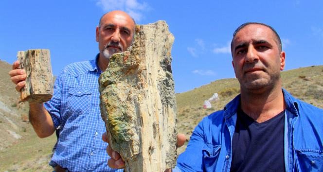 Erzurumda 160 milyon yıllık keşif