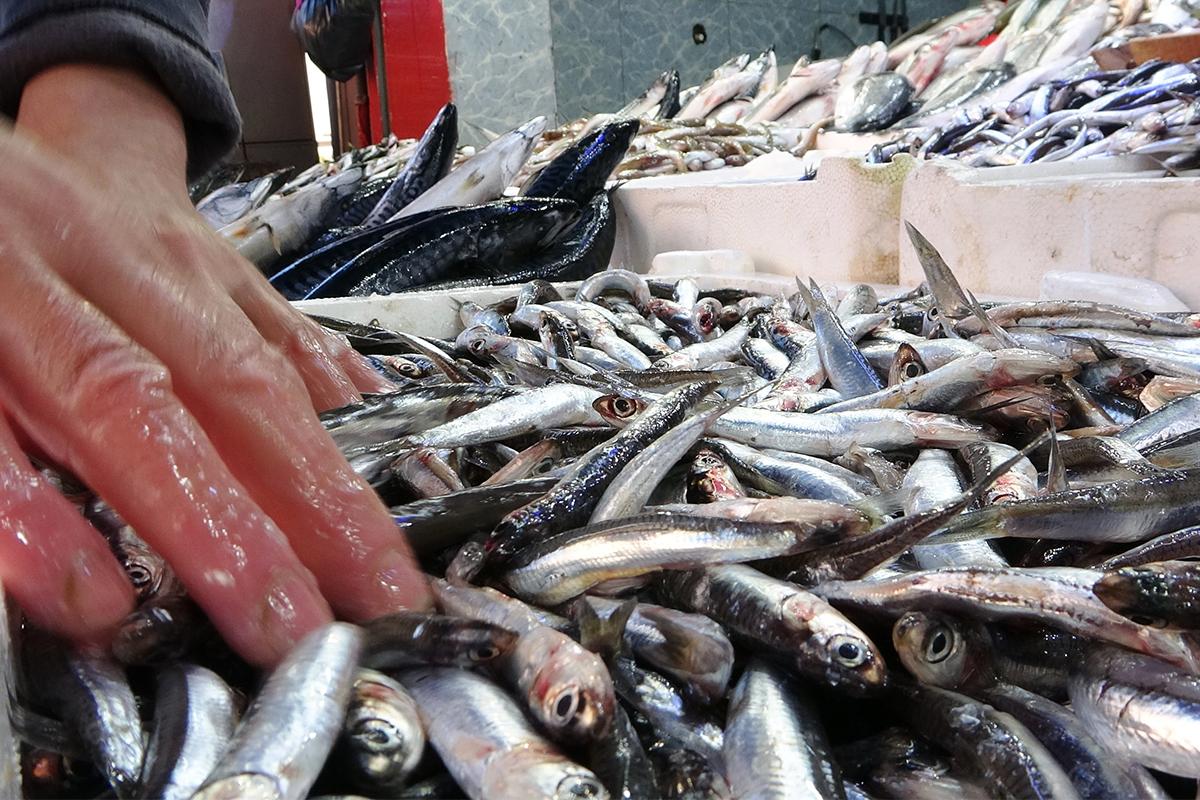 Balık tezgahlarında hamsi günü