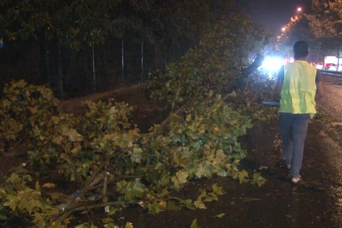 Sarıyer'de şiddetli yağış ve rüzgar nedeniyle ağaçlar yola devrildi