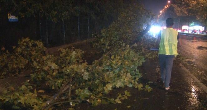 Sarıyerde şiddetli yağış ve rüzgar nedeniyle ağaçlar yola devrildi