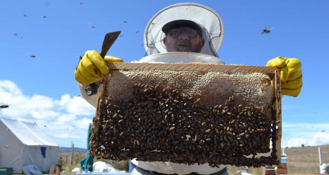Tokatta kuraklık arıcıları vurdu, bal üretimi yüzde 40 düştü
