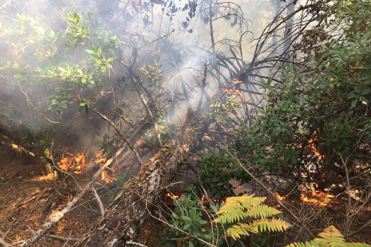 Balıkesir'de yıldırımın düştüğü ormanlık alanda yangın
