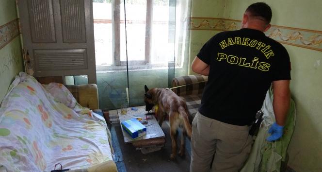Narkotik köpeği metruk binadaki uyuşturucuyu böyle buldu