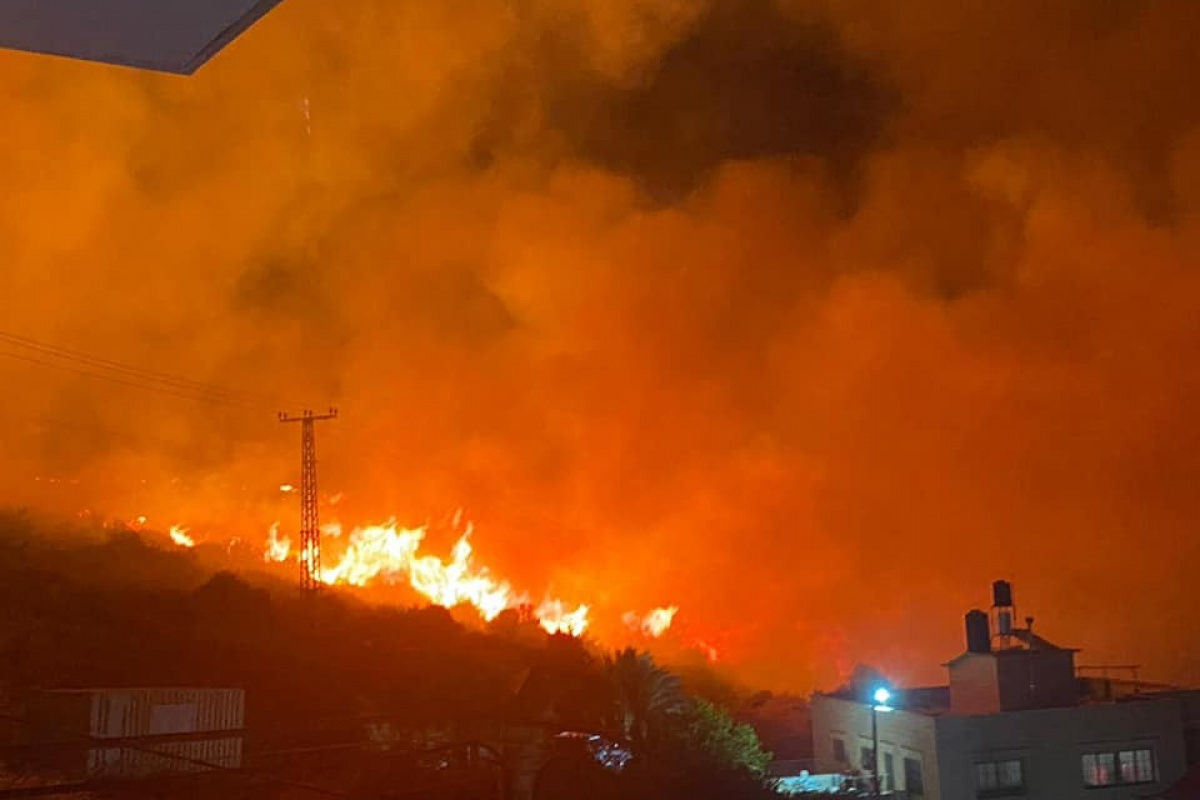 İsrail'de orman yangını