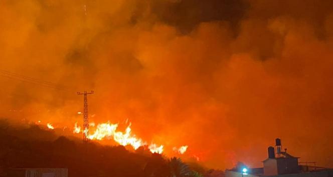 İsrailde orman yangını
