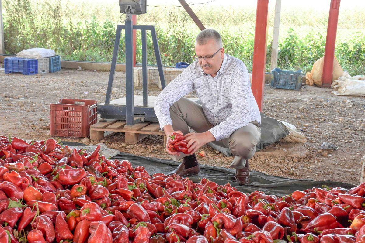 Karacabey'de kırmızı biber bereketi