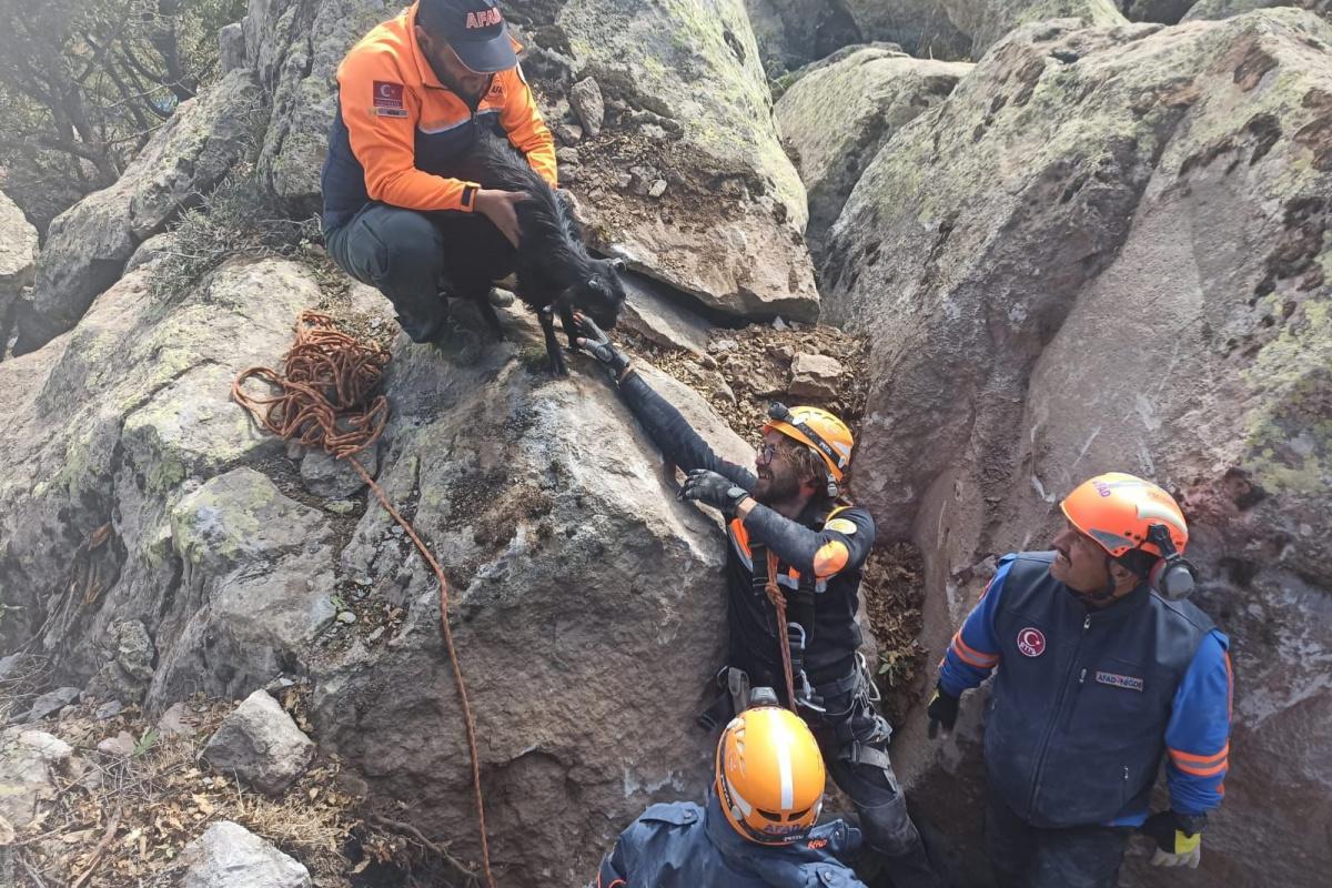 Dehlizde mahsur kalan oğlağı AFAD kayayı delerek kurtardı