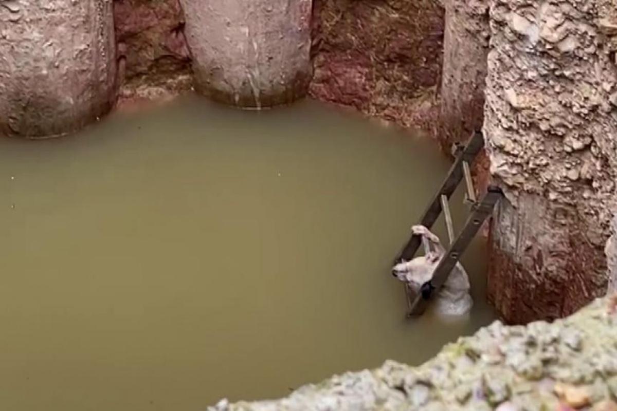 Su dolu çukura düşen köpek donmak üzereyken kurtarıldı