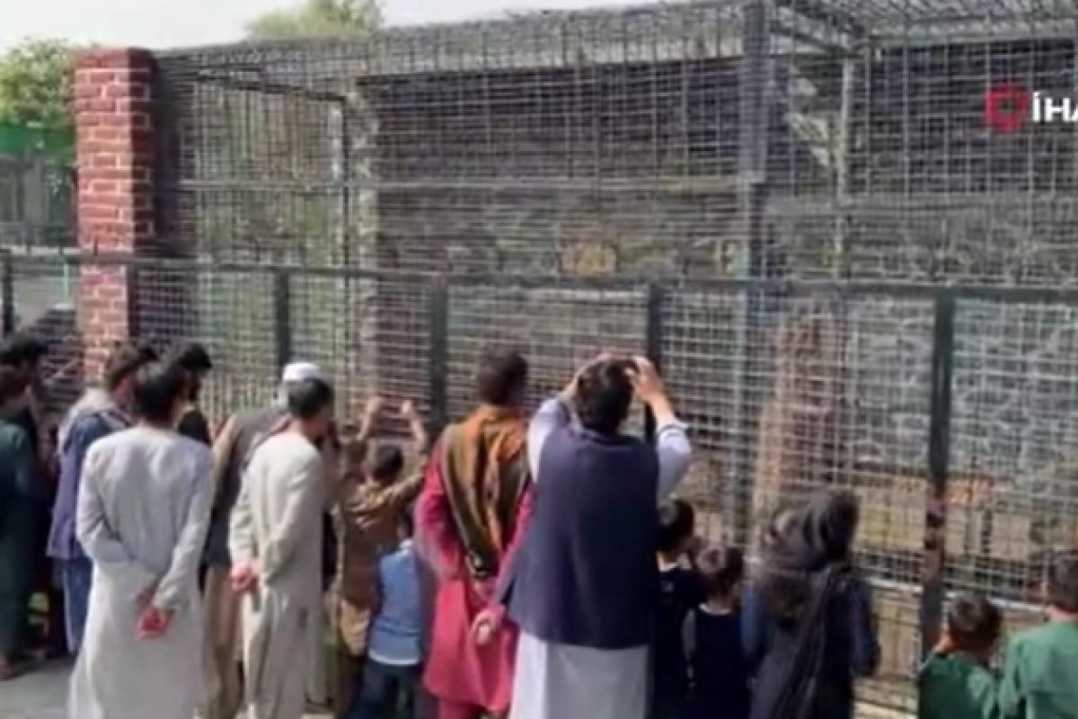 Kabil Hayvanat Bahçesi, ziyaretçilerini ağırlamaya başladı