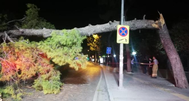 Çam ağacı devrildi, tramvay seferleri durdu
