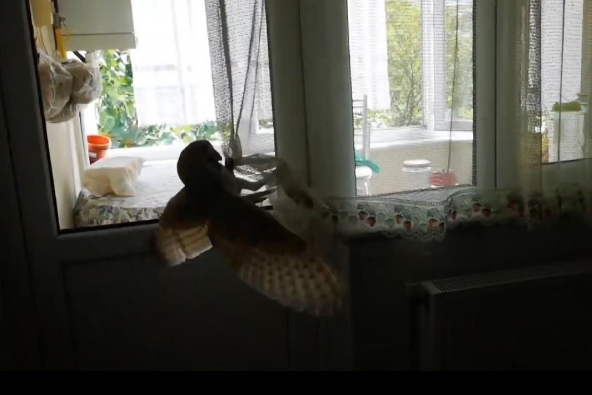 Evin içine baykuş girdi, herkes kaçtı, o kurtardı