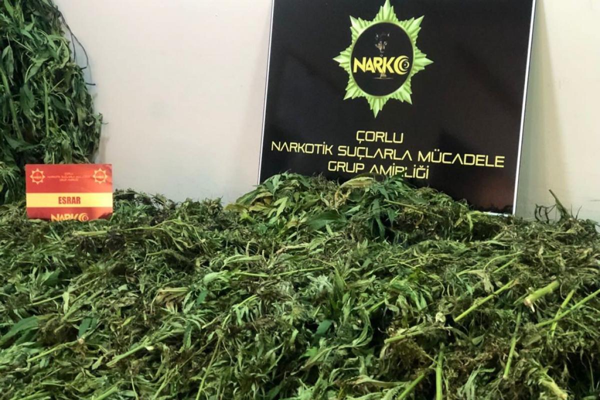 Tekirdağ'da 19 kilo esrar ve kenevir bitkisi ele geçirildi: 2 gözaltı