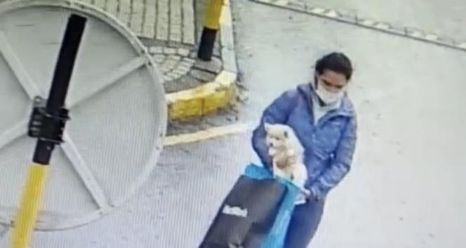 Sarıyerde köpek hırsızlığı kamerada
