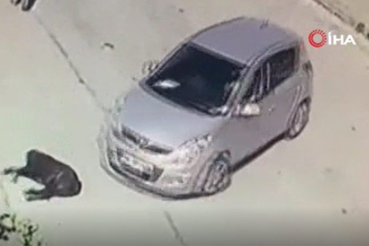 Otomobilini park ederken aracı kaldırımda yatan köpeğin üzerine sürdü